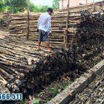 Cừ Tràm – Loại vật liệu xây dựng kinh tế nhất hiện nay