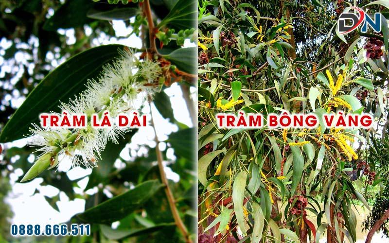 tram la dai - tram bong vang