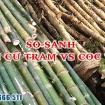 So sánh sự giống và khác nhau giữa cọc cừ tràm và cọc tre