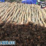Bán Cừ Tràm Xây Dựng Giá Rẻ Tại Tp.HCM, Đồng Nai, Long An…