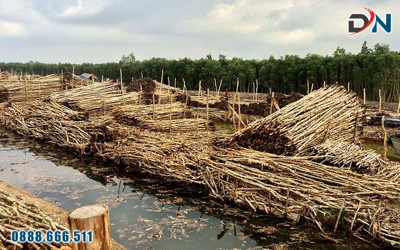 Cây cừ tràm huyện Hòn Đất tỉnh Kiên Giang
