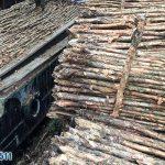 Các nghiên cứu về tính chất và cách sử dụng gỗ cừ tràm