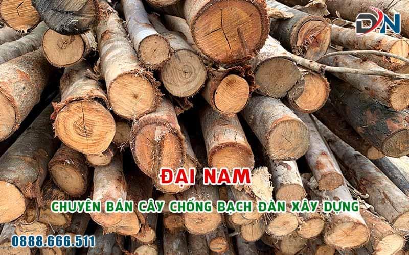 cay chong bach dan